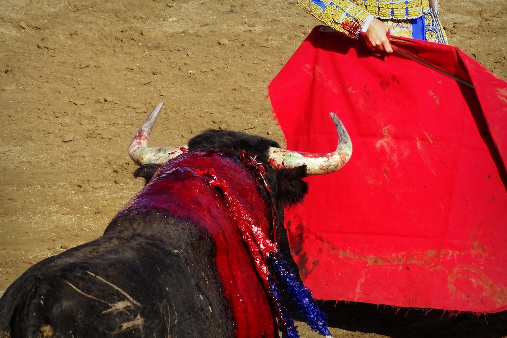 The World's newest photos of france and torero - Flickr Hive Mind