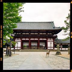 Nara (instagram.com/dimush) Tags: portra400 rolleiflex 120mm kodak portrait analog 120мм 120film среднийформат epsonv700 rolleiflex28e 120 portra grainisgood girl tlr 6x6 пленка film mediumformat nara narapark