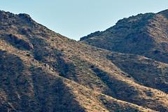 07162019000012401 (Verde River) Tags: landscape bird birds cactus nature rabbit