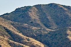 07162019000012400 (Verde River) Tags: landscape bird birds cactus nature rabbit