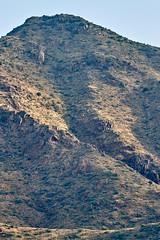 07162019000012392 (Verde River) Tags: landscape bird birds cactus nature rabbit