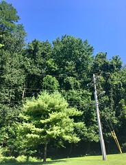Park School ~ along the driveway (karma (Karen)) Tags: parkschool pikesville maryland trees poles htmt htt