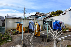 Rilakkuma (m-louis) Tags: 6713mm j5 nikon1 japan kaizuka laundry osaka parking planter tree 大阪 日本 植木鉢 洗濯物 貝塚