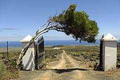 Gate To .....? (RadarO´Reilly) Tags: tor gate hoyadelapila lanzarote landschaft landscape küste coast baum tree