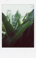 Have Some Greens (Images of Light TH) Tags: instant film travelphotography instax