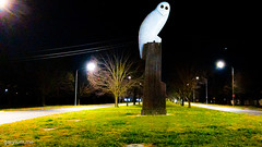 The Owl Statue on Wednesday morning (garydlum) Tags: owlstatue publicart canberra australiancapitalterritory australia