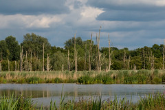 Osprey (christina.marsh25) Tags: osprey fishlakemeadows romsey hampshire raptor falcon