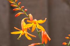 raw macro (kanti83) Tags: garden plants cloose up macro