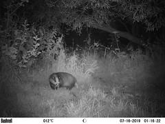 Badger 7 (Bassman99) Tags: scottishwildlife blackisle bushnell