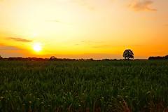 July sunset (Ugborough Exile) Tags: 2019 stafford staffordshire gnosall midlands england uk sony rx100vi
