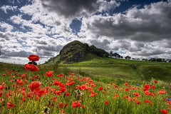 The Hill & Poppies (ALANSCOTT1) Tags: scotland poppies loudonhill outlawking ayrshire lanarkshire robertthebruce