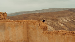 king herod's guard (Conny Spandl) Tags: masada israel desert bird orange landscape panaso 45 mm