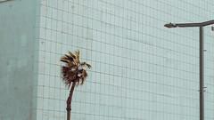 swimming pool blues (Conny Spandl) Tags: telaviv architecture palms street photography lumix panaso 45 mm