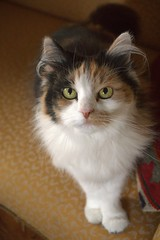 Vinje0022 (Ellyphant_9) Tags: cats animals cat cute catseyes eyes portrait portraits