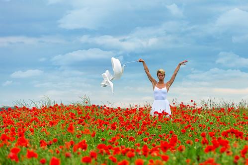 Poppies # 06
