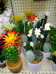Forever Cactus (M.P.N.texan) Tags: shop shopping store cactus cacti faux fake artificial decor decoration