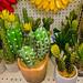 Forever Cactus