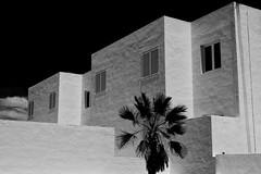 White Walls (RadarO´Reilly) Tags: lanzarote puertodelcarmen spain building white palmtree sw bw schwarzweis blackwhite blanconegro monochrome noiretblanc zwartwit architecture