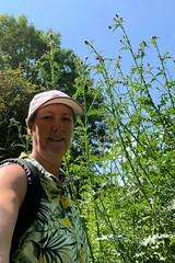 17 tall thistles (Margaret Stranks) Tags: winchcombearea gloucestershire