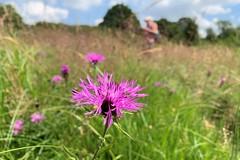 08 pretty flowers (Margaret Stranks) Tags: winchcombearea gloucestershire