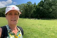 34 through a sheep field (Margaret Stranks) Tags: winchcombearea gloucestershire