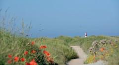 Westkapelle (Omroep Zeeland) Tags: westkapelle zee walcheren zeeland zomer gemeenteveere vuurtoren klaprozen wandelen buienradar meteogroup