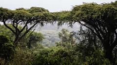 (Markus Hill) Tags: africa travel nature canon tanzania safari ngorongoro crater arusha tansania 2019
