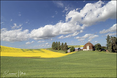 Round Barn (peachesandolivia (8 years and counting!)) Tags: peachesandolivia canon7dmarkii washington sky clouds yellow gren barn buildings landscape thepalouse