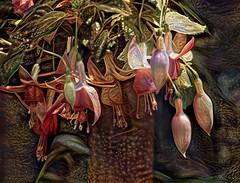 Festive Fuchsias (done by deb) Tags: deepdreamgenerator ddg digitalflowerpainting digitalpainting digitalart vividcolor brightcolors