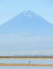 Licanabur, the sacred volcano of the Atacama (with Chilean flamingo). (Ruby 2417) Tags: licanabur volcano mountain peak cone atacama chile desert salar salt flamingo bird wildlife nature scenery landscape