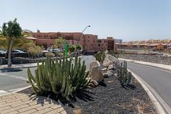 Sandos San Blas Hotel, Tenerife, Canary Islands (wildhareuk) Tags: canaryislands canon canoneos500d hotel road spain tamron18270mm tenerife tenerife2019 building euphorbia sandossanblas tamron img9663dxo