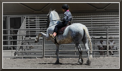 StateFair_4263 (bjarne.winkler) Tags: 2019 california state fair horse doing highfive i think