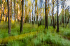 Nature's Beauty in Blur Pic #4 (Picture-Perfect Pixels) Tags: britishcolumbia franciskingprovincialpark vancouverisland woodland trees park intentionalcameramovementl icm blur blurred canada highlands forest trail abstract artsy nature artistic colourful outdoors flickrexplorejuly172019