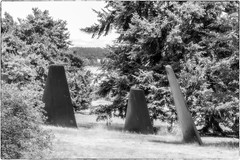 Three Fins in the Trees (NoJuan) Tags: gx85 panasonicgx85 75mm olympus75mmf18 microfourthirds micro43 mirrorless m43 mft magnusonpark seattlewa washingtonstate pacificnorthwest artinstallation publicart thefinproject bw blackwhite blackandwhite silkymonochrome