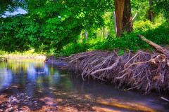 Exposed Roots, 2019.07.15 (Aaron Glenn Campbell) Tags: 3xp ±2ev hdr rural roots trees erosion mudrun stream water reflections summer outdoors optoutside sony a6000 ilce6000 mirrorless skylum macphun aurorahdr nikcollection colorefexpro sigma 19mmf28exdn primelens wideangle emount