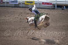 Calgary Stampede 2017 (tallhuskymike) Tags: calgary stampede event rodeo calgarystampede cowboy alberta action western 2017 prorodeo greatestoutdoorshow