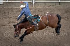 Calgary Stampede 2017 (tallhuskymike) Tags: calgary stampede event rodeo calgarystampede cowboy horse alberta action western 2017 prorodeo greatestoutdoorshow