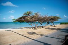 _DSC7167 (Big B Photography) Tags: aruba