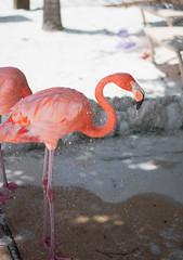 _DSC6983 (Big B Photography) Tags: aruba