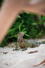 _DSC6976 (Big B Photography) Tags: aruba
