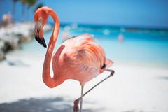 _DSC6964 (Big B Photography) Tags: aruba