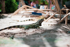 _DSC6960 (Big B Photography) Tags: aruba