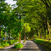 Street with many trees in Nagoya, Japan