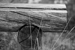 IMG_0690 (www.ilkkajukarainen.fi) Tags: suomi finland finlande eu europa scandinavia kelo kelohonko finnmark ruija lappi lappland happy life line visit travel travelling puu wood carving lohiranta teno tenojoki