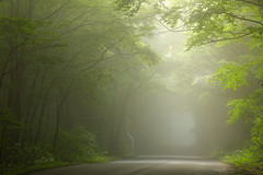 3362 (Keiichi T) Tags: 木 tree 6d 霧 road 道 green 森 朝 fog shadow eos 光 canon 日本 影 緑 morning japan forest light