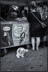 dogs and their people (m_spoke) Tags: street dogs people leicam8