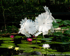 20190516European Vacaton27200-Edit (Laurie2123) Tags: chihuly fujixt2 kewgardens laurieabbotthart laurietakespics laurie2123 london reflectionsonnature vacation