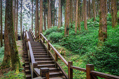 Tropical rainforest with wooden stair (jack-sooksan) Tags: tropical rainforest wet moisture stair ladder way walkway path passage route step forest green jungle wood wooden tree bush verdant shrub weather climate mountain hill mount slope grass bridge trail plant park landscape natural environment outdoor nature