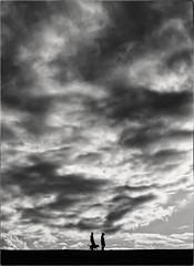 Walking The Dog (Peter Polder) Tags: australia bw clouds dusk dog exterior people field sky landscape monochrome mono man overcast park sydney skyline urban