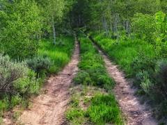 Parallel Trails (Robert Cowlishaw (Mertonian)) Tags: forsophia trees nature beautiful beauty canon wonder hiking powershot beginning aspens awe gratitude ineffable parallelpaths canonpowershotsx70hs sx70hs deepseeksdeep